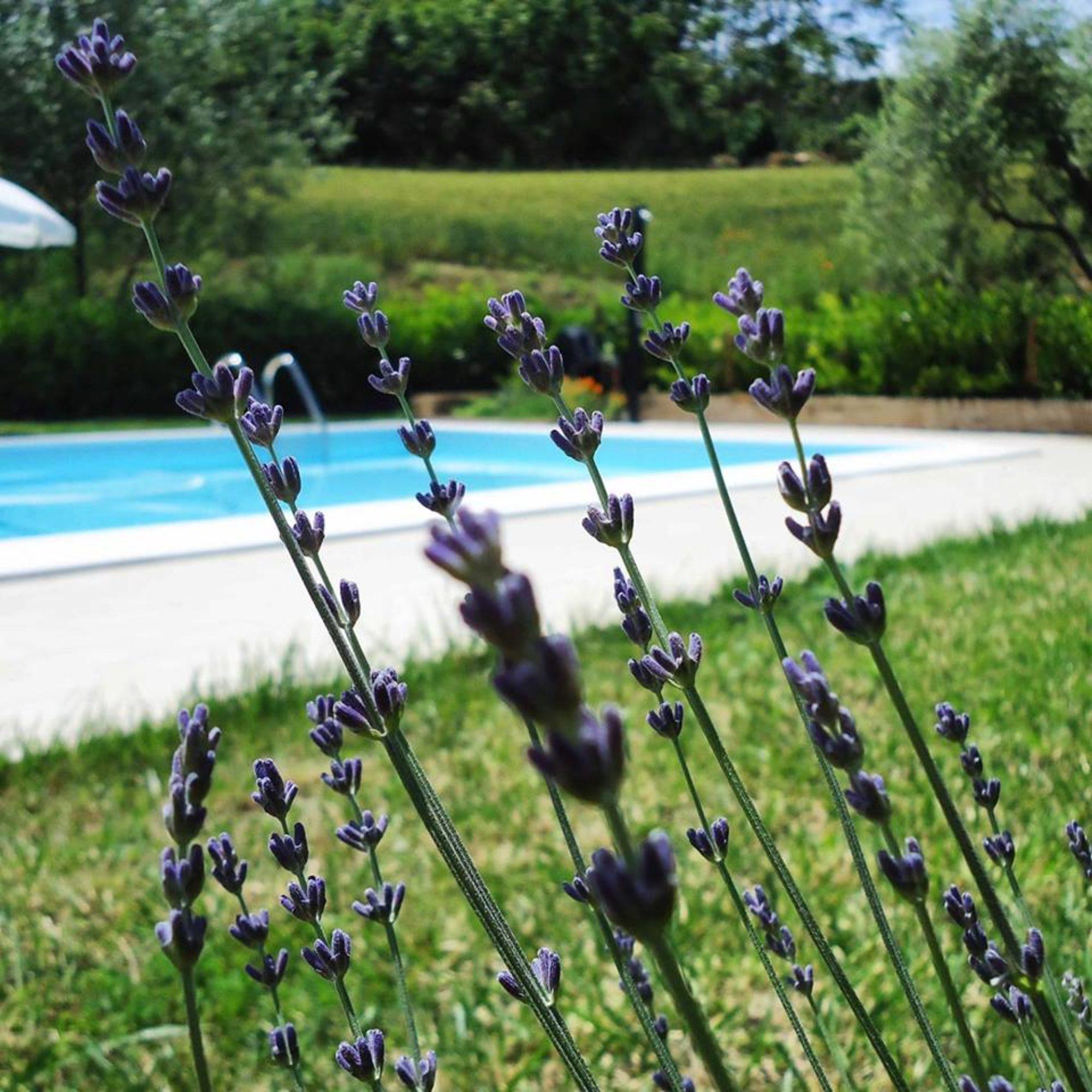 Casina Foglietti, your villa in Italy